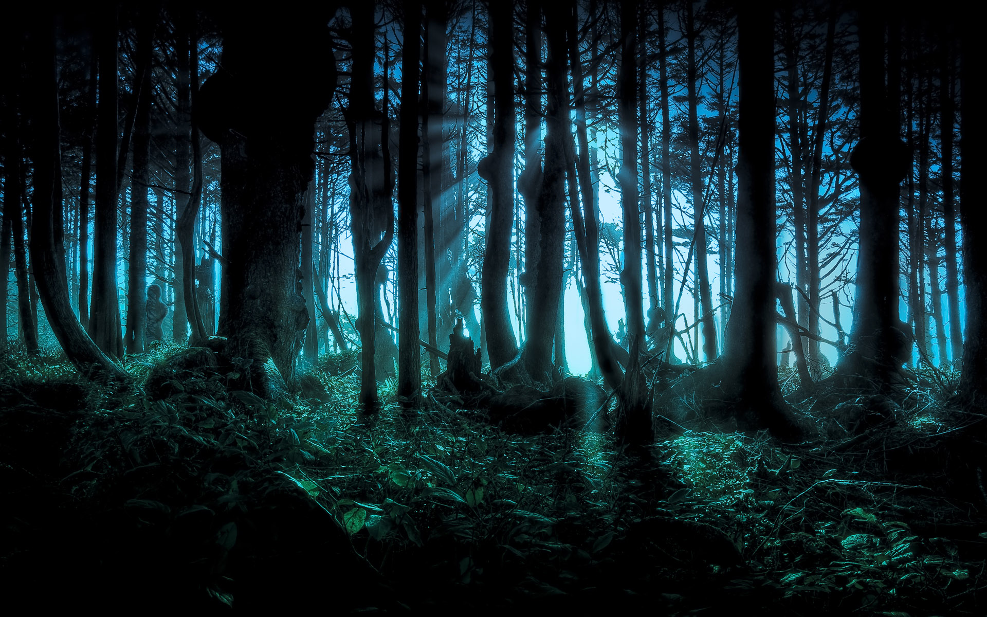 Woods in Darkness